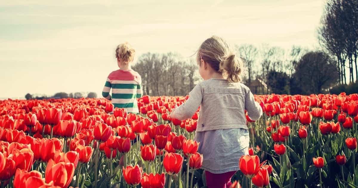 チューリップ畑で遊ぶ子どもたち